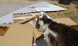 blocking outdoors and keeping cats occupied