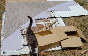 blocking outdoors and entertaining cats